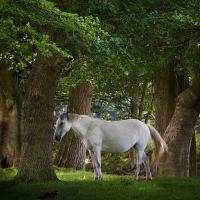 Magical Woodland by Craftysnapper in Regular Member Gallery