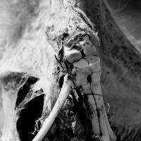 Coyote's Bones by johnastovall in johnastovall