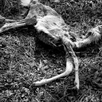 The Bones Of Deer by johnastovall in johnastovall