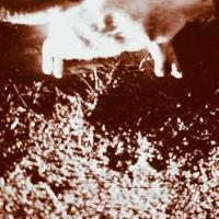 Dead Cat in a Gutter by johnastovall in johnastovall