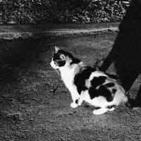 Shadow Cat by johnastovall