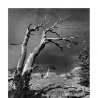 272129 by Landscapelover in Regular Member Gallery