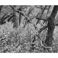493665 by Landscapelover