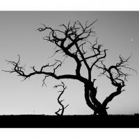 685462 by Landscapelover