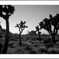 738328 by Landscapelover