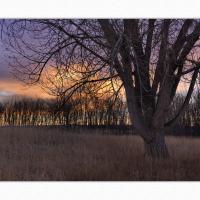 926639 by Landscapelover in Regular Member Gallery