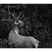 Dsc0271 by Landscapelover