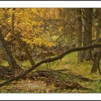 Dsc4143 Crop by Landscapelover
