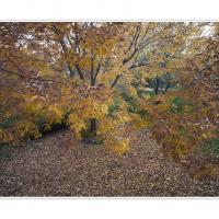 Dsc4354 Crop by Landscapelover