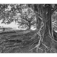 A6539176 Crop by Landscapelover in Regular Member Gallery