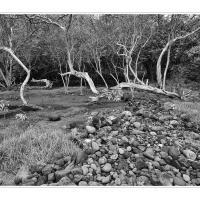 A6539667 by Landscapelover in Regular Member Gallery