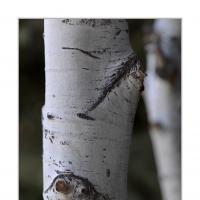A 0360 Prv by Landscapelover