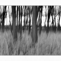 A 0396 Prv by Landscapelover