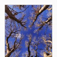 A 0420 Prv by Landscapelover