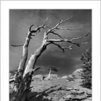 A 0487 Prv by Landscapelover in Regular Member Gallery