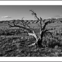 Cf000106 by Landscapelover