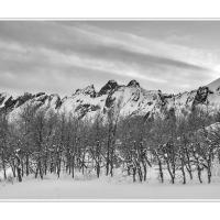 Cf004724 by Landscapelover
