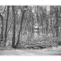 Cf005381 by Landscapelover