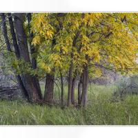 Cf010285 by Landscapelover