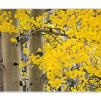 Cf010373 by Landscapelover