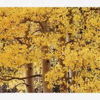 Cf010383 Usm by Landscapelover