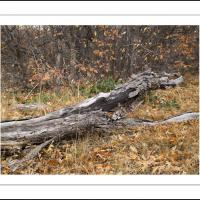 Cf010645 by Landscapelover