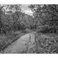 Cf010663 1 by Landscapelover