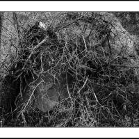 Cf010688 by Landscapelover