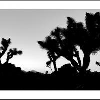 Cf012226 by Landscapelover
