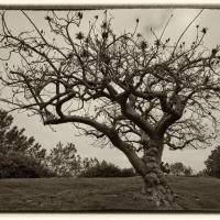 Cf012356 by Landscapelover in Regular Member Gallery