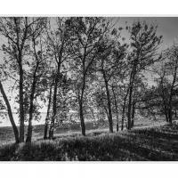 Cf016963 1 Crop by Landscapelover