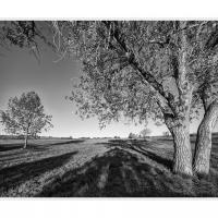Cf016983 1 by Landscapelover