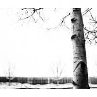 Cf033043 by Landscapelover in Regular Member Gallery