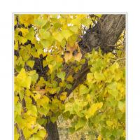L1000781 by Landscapelover in Regular Member Gallery