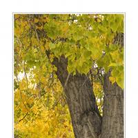 L1000788 by Landscapelover in Regular Member Gallery
