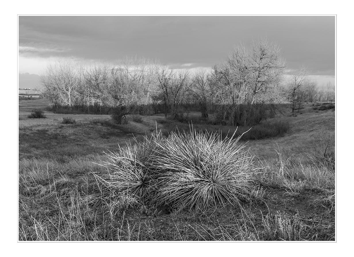 L1005647 Sharpen by Landscapelover in Regular Member Gallery
