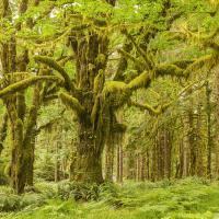 tree cf004106 straight small 808556 by Landscapelover