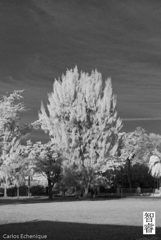 Infrared Pine
