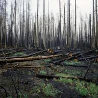 Yellowstone2 by JimCollum in Jim Collum