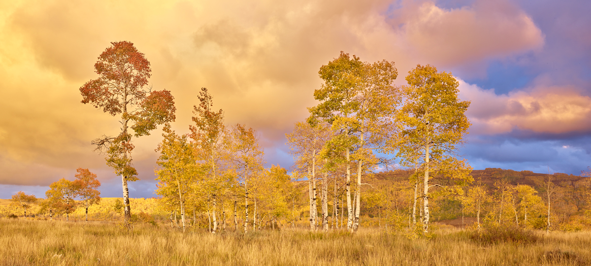 Clearing Aspen Storm 2 by Kevin Sink in Regular Member Gallery