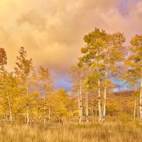 Clearing Aspen Storm 2 by Kevin Sink in Regular Member Gallery