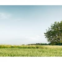 Tree Panorama by photomgraphy