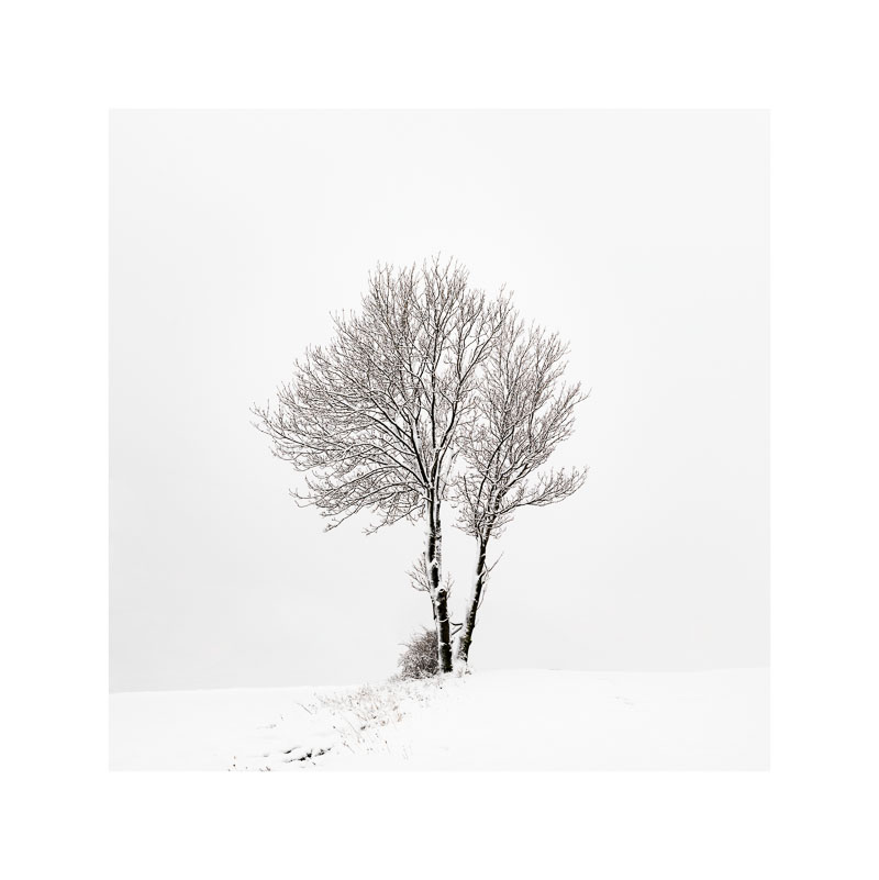 First Snow Here In 2013 by photomgraphy in Regular Member Gallery