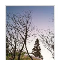 Autumn Flip by WildRover in Regular Member Gallery