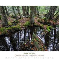 Borealwetland900web by WildRover in Regular Member Gallery