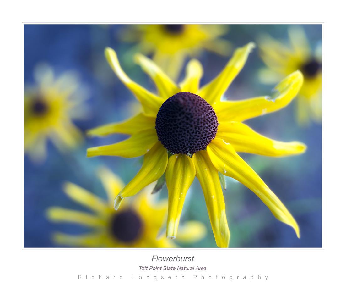 Flowerburst900web by WildRover in Regular Member Gallery