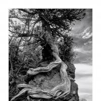 Naturalbond900web by WildRover in Regular Member Gallery