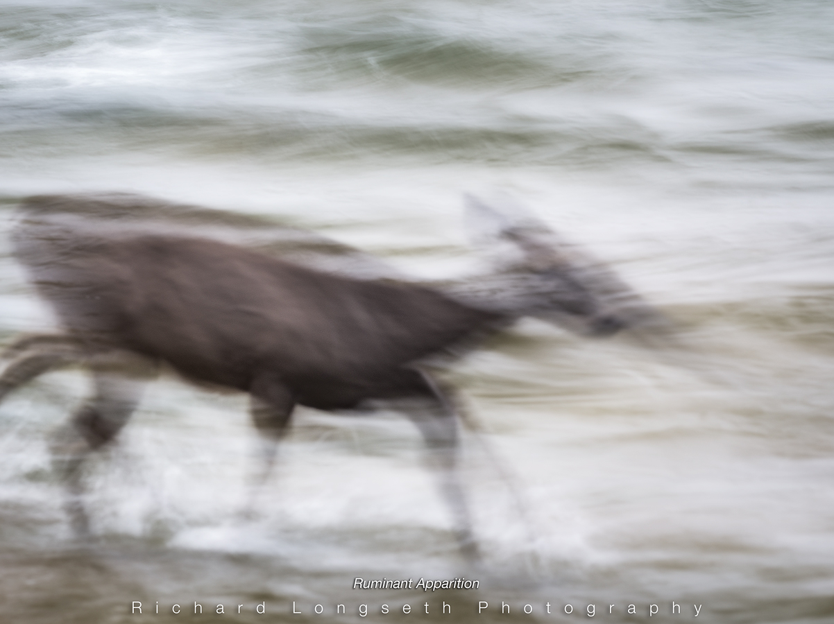 Ruminant Apparition by WildRover in Regular Member Gallery