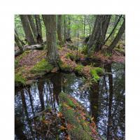 Wetforest900web by WildRover in Regular Member Gallery