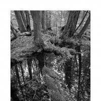 Wetlandsdiversity900web by WildRover
